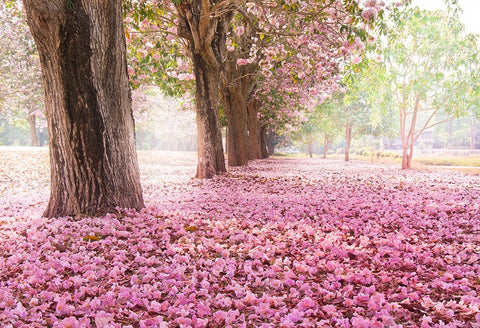 Scenic Backdrops Flower Backdrops Trees Parks Woodland Backdrops HJ04111