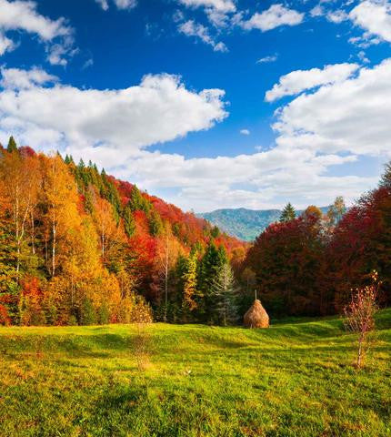 Scenic Backdrops Trees Parks Woodland Backdrops Leaf Backdrop Fall Backdrops Beautiful Backdrops Scenic Backdrops J03483