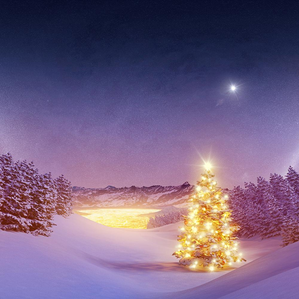 Christmas Tree at Night Background Photography Backdrops IBD-19410