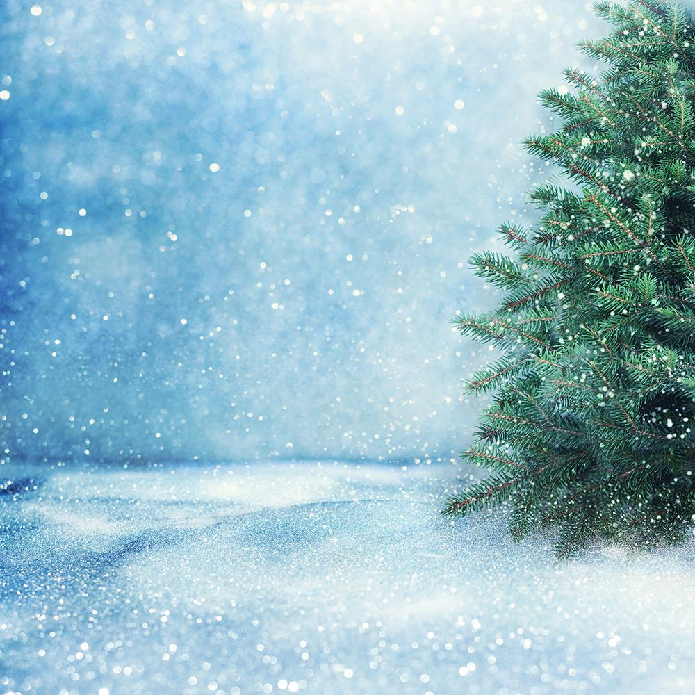 Corner of Snow Pine Background Christmas Backdrops IBD-19420