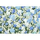 Patterned Backdrops Flower Backdrop Spring Backgrounds G-607