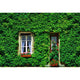 Window And Door Backdrops Green Backdrop Leaf Background G-669
