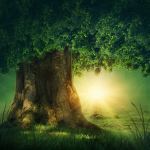 Baby Backdrops Cartoon Fairytale Backdrops Gigantic Tree Background