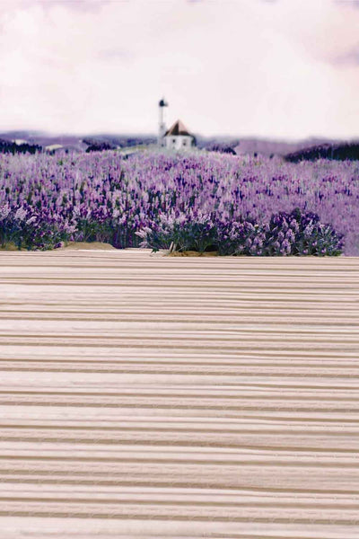 Season Backgrounds Summer Backdrops Purple Backdrop Lavender N10508-E