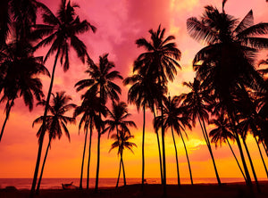 Palm Tree Silhouette Photography Backdrop on Tropical Beach at Sunset Time IBD-20140