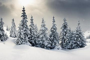 Pine Snowfield Background Winter Christmas Backgrounds Portrait Photography Backdrops IBD-19703