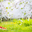 Season Backdrops Spring Backdrops Green Background S-3101