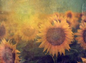 Scenic Landscape Background Dark Yellow Blooming Sunflower Portrait Photography Backdrop IBD-20136