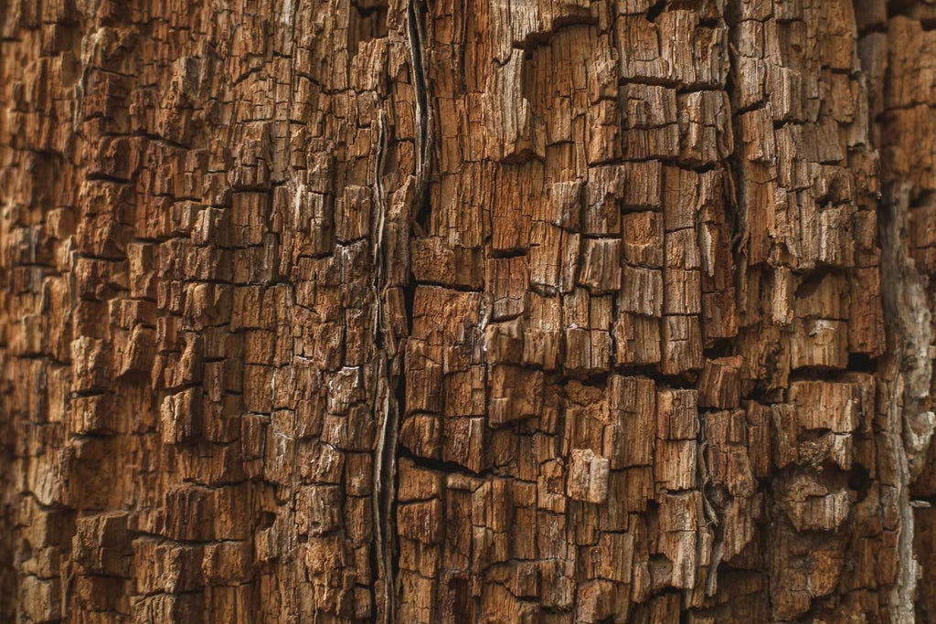 Rotting Wood Texture Photography Backdrop IBD-24285