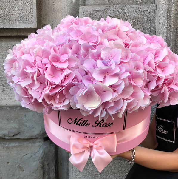 Classic Collection - One Million - Hortensia Rosa - Scatola Rosa
