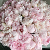 Classic Collection - One Million - Peonie Rosa - Scatola Bianca