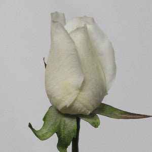 Rose - Real Touch - Bud - Cream