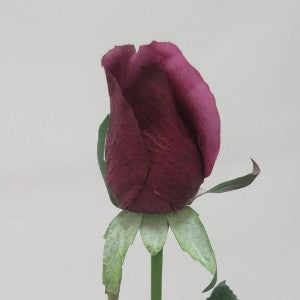 Rose - Real Touch - Bud - Aubergine