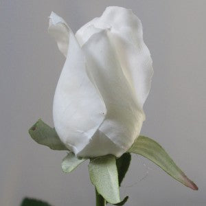 Rose - Real Touch - Bud - White