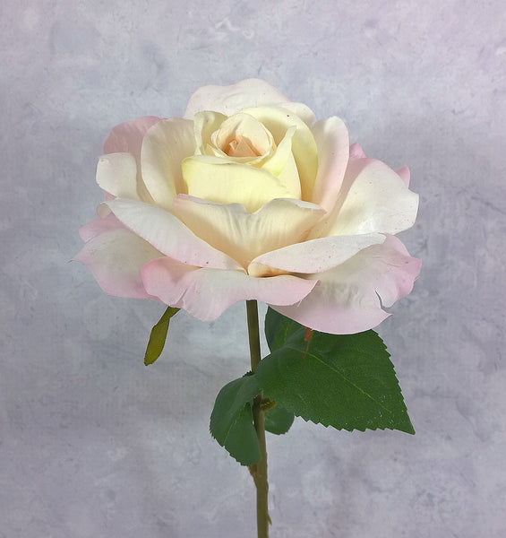 Victorian Open Rose