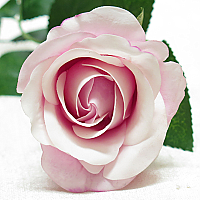 Rose - Real Touch - Half Bloom - Pink Ice