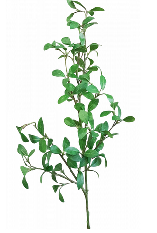 Privet Leaf Spray