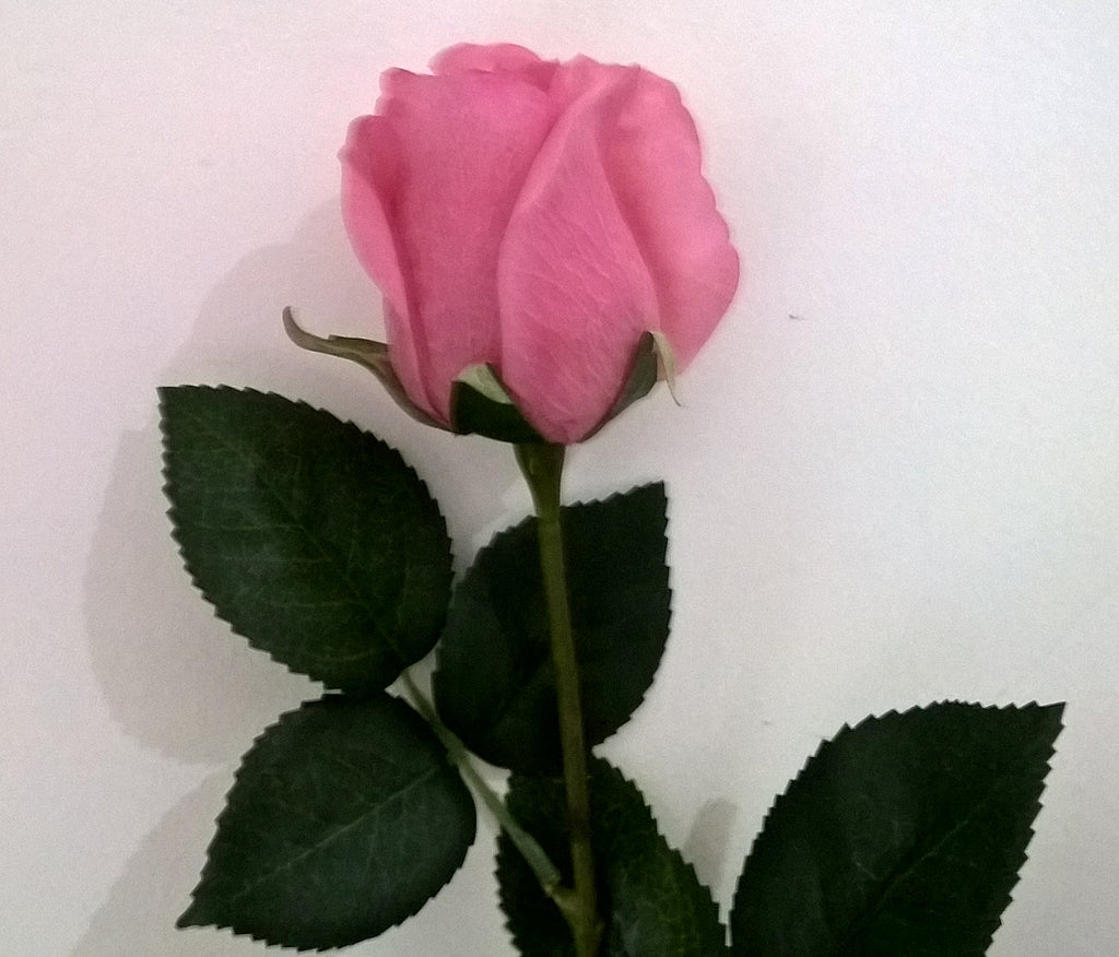 Rose Bud Real Touch ONLY 12 LEFT