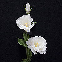 Lisianthus  Real Touch - White