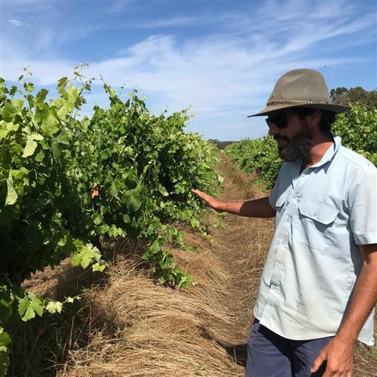 Rebels of Wine : Sam Vinciullo