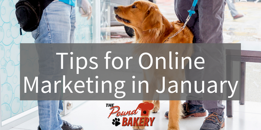 Marketing Tips For Your Pet Business in the New Year