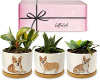Three White Planters with Corgi's