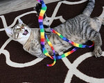 Rainbow Dangling Cat Charmer
