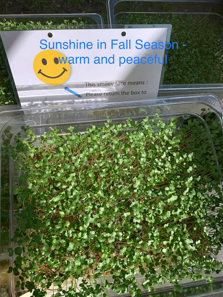 Help young children with autism spectrum to mitigate the symptoms by broccoli microgreens.
