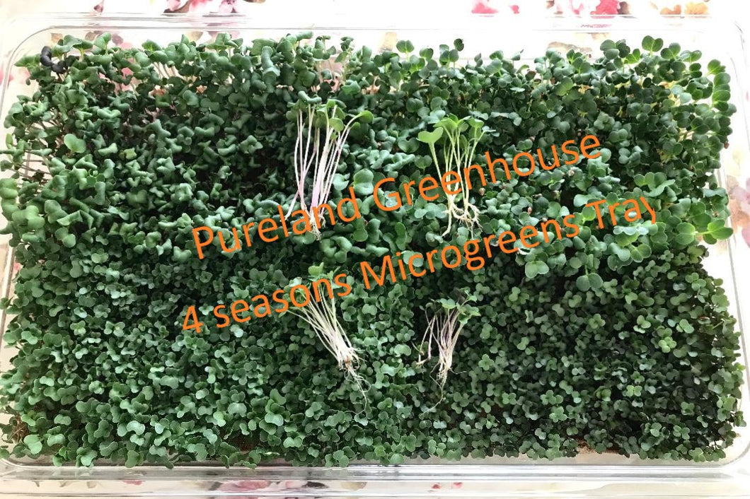 Customized grow microgreens as you want!