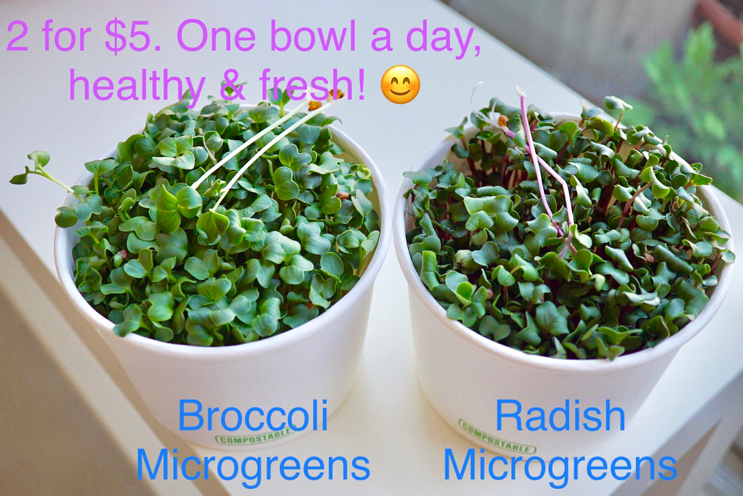 Broccoli or Radish microgreen bowls