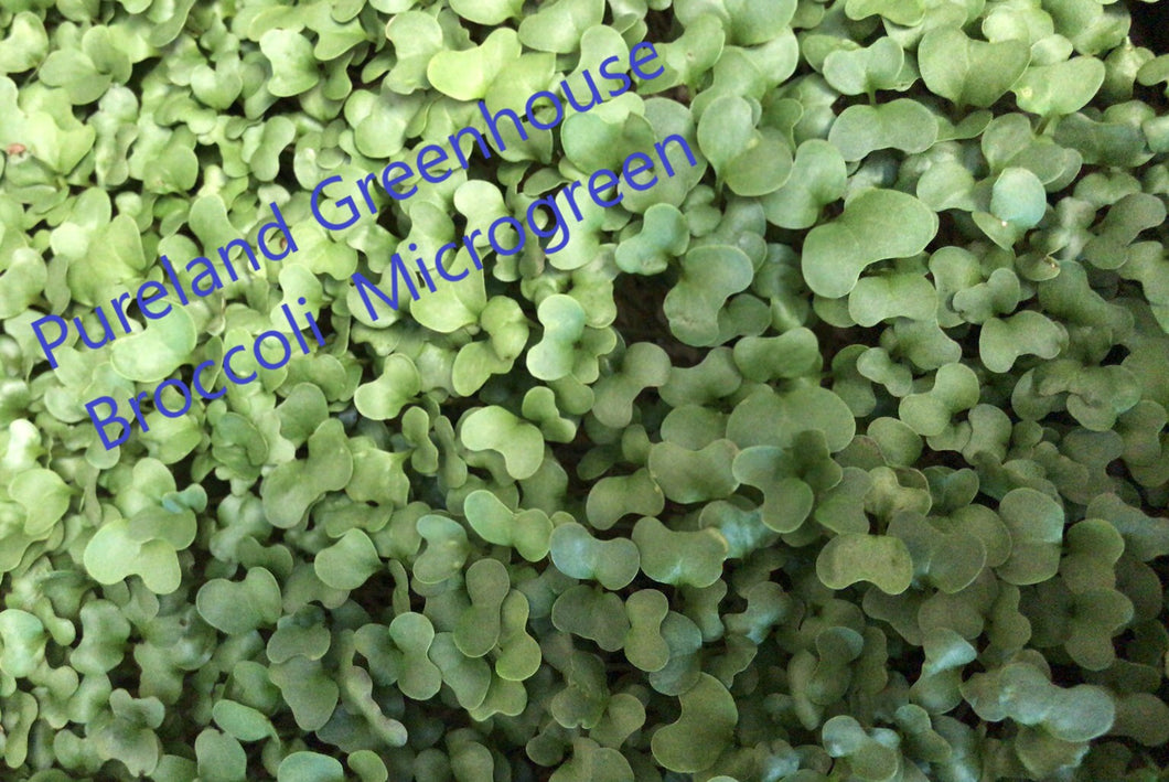 Broccoli microgreen tray