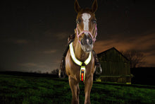 Tahoe Reflective Light Up LED Breast Collar