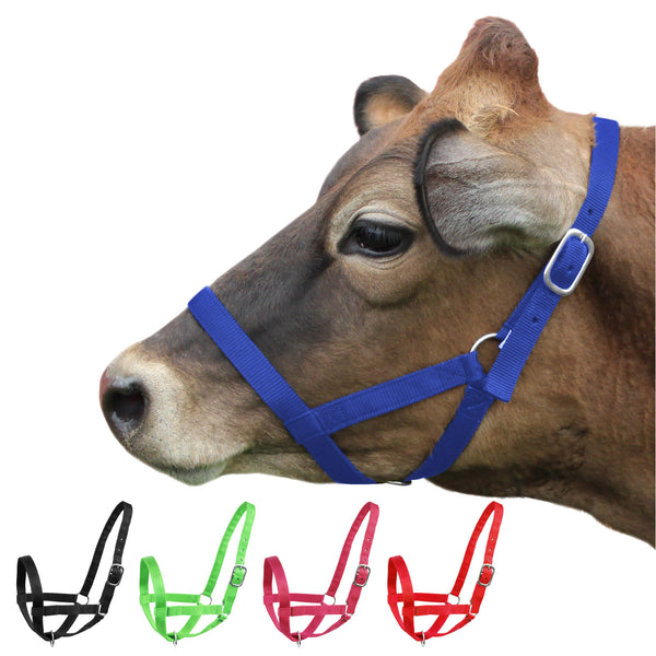 Derby Originals Adjustable Nylon Livestock Cattle Halters Available in Multiple Colors