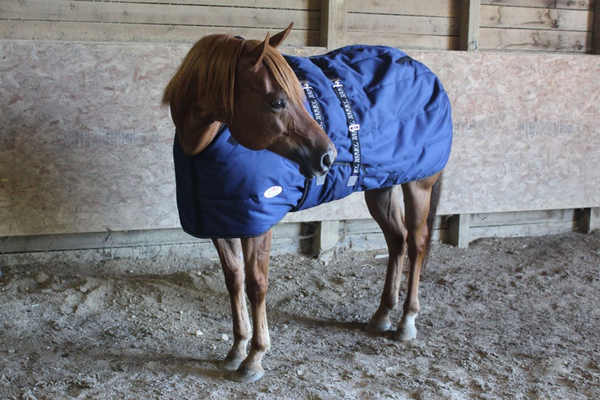 Derby Originals Nordic Tough Closed Front 1200D Water Resistant Reflective Winter Horse Stable Blanket 300g Heavy Weight 1 Year Warranty
