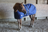 products/2Winter_Horse_Stable_Blanket_1200D_Lifestyle_2_Navy_Blue_80-8031V2.png