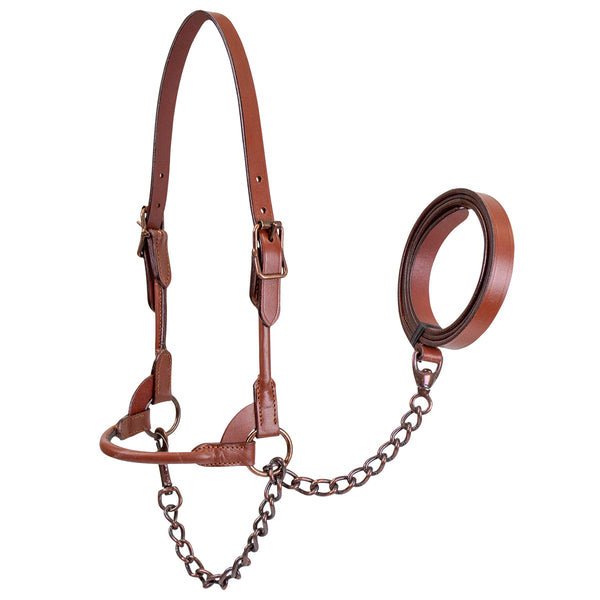 Derby Originals New and Improved Premium Round Rolled Leather Cattle Show Halter with Matching Chain Lead  - One Year Limited Manufacturer's Warranty