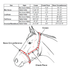products/3Reflective_Safety_Halter_with_Lead_Size_Chart.png