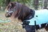 products/3Winter_Horse_Blanket_Turnout_Lifestyle_80-8024V2.png