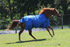 products/3Winter_Horse_Turnout_Blanket_1200D_Triple_Gusset_Lifestyle_6_80-8040V2.png