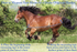 products/4Measuring_A_Horse_Blanket_Graphic.png