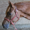 Derby Originals Desert Rose Collection Rose Gold Reflective Safety Flex-Webb Horse Halters with Matching Lead Ropes