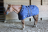 products/6Winter_Horse_Stable_Blanket_1200D_Lifestyle_1_Navy_Blue_80-8031V2.png