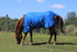 products/6Winter_Horse_Turnout_Blanket_1200D_Triple_Gusset_Lifestyle_7_80-8040V2.png