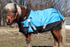 products/7Winter_Horse_Blanket_Turnout_Lifestyle_80-8024V2.png