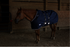 products/7Winter_Horse_Stable_Blanket_1200D_Lifestyle_Reflective_Navy_Blue_80-8031V2.png