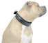 Derby Dog Designer Series USA Leather Padded Bully Dog Collar