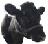 products/Cattle-Halter-Crystal-Cow_48f015b2-6559-49eb-87d5-0f4ee86d2a7e.jpg