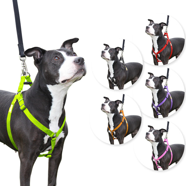 Step in Dog Harness by cuteNfuzzy®