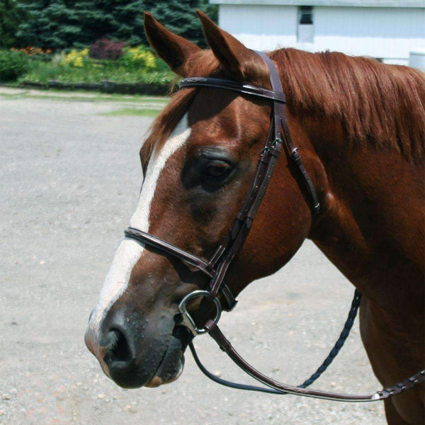 Paris Tack Everyday Raised Fancy Stitched Leather English Schooling Bridle with Laced Reins