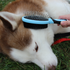 products/Grooming_Brush_Double_Sided_Pet_Lifestyle_Brush_Dog_99-1002.png